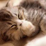 2月22日はニャンニャンニャンで猫の日 猫が顔を洗うと雨が降る!?